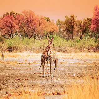 LOWER-ZAMBEZI-NATIONAL-PARK