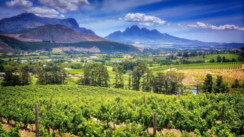 GOURMET CAPE & WINELANDS EXPERIENCE