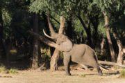 ROMANCE ZAMBIA