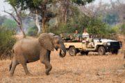 ZAMBIA MOBILE WALKING SAFARI