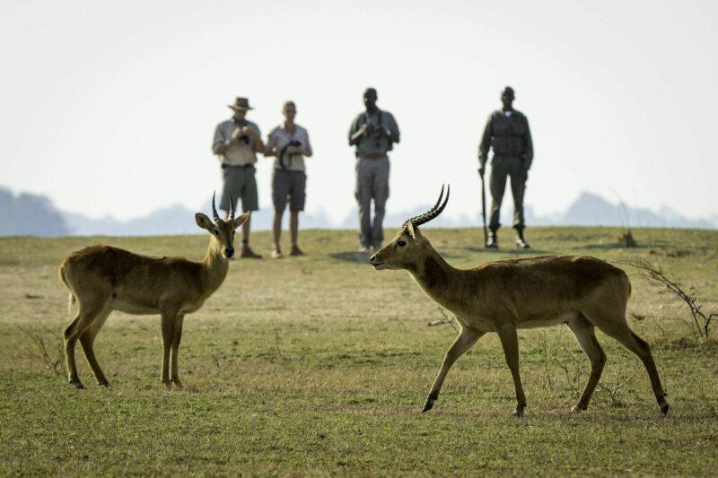PHOTOGRAPHIC SAFARI ZAMBIA